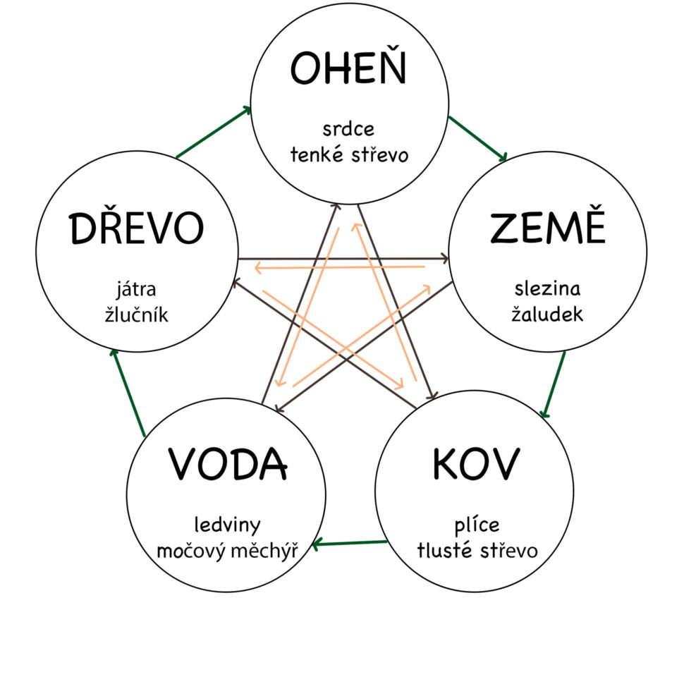 Cyklus 5 elementů vlidském těle